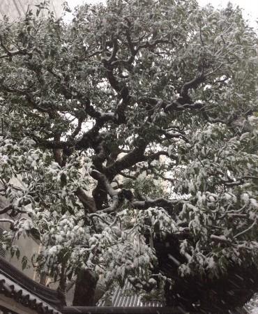 雪だるまコレクション2015