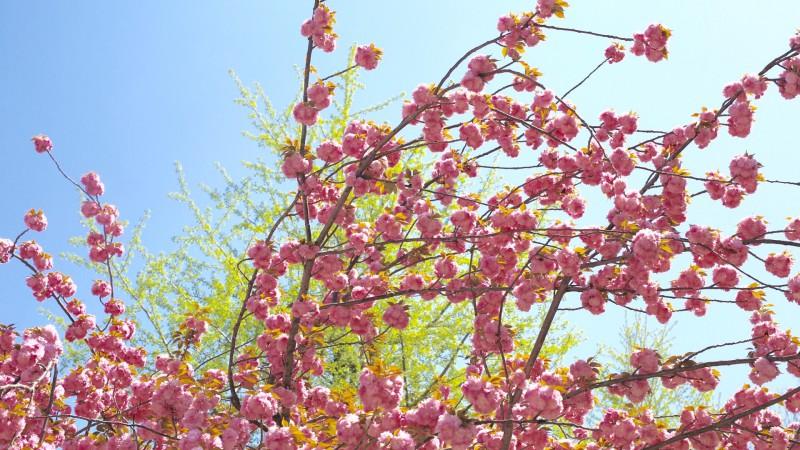 京の風景に馴染む色